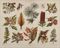 Botanical prints, various artists