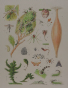 Natural history prints, other artists/publishers